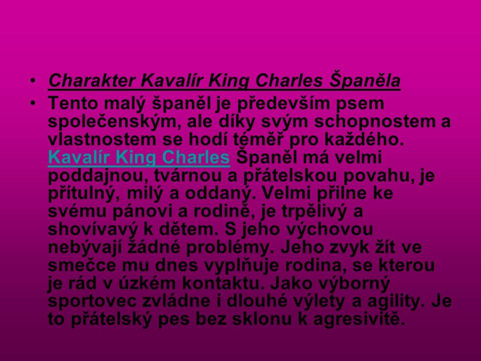 Charakter Kavalír King Charles Španěla Tento malý španěl je především psem společenským, ale díky svým schopnostem a vlastnostem se hodí téměř pro kaž