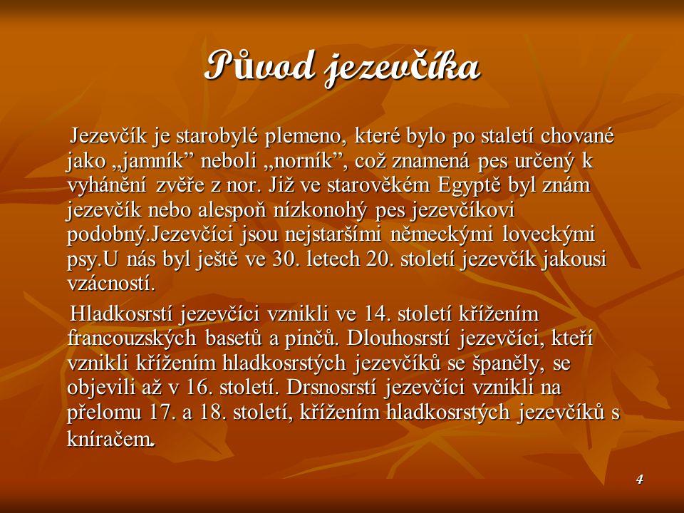 """4 P ů vod jezev č íka Jezevčík je starobylé plemeno, které bylo po staletí chované jako """"jamník neboli """"norník , což znamená pes určený k vyhánění zvěře z nor."""