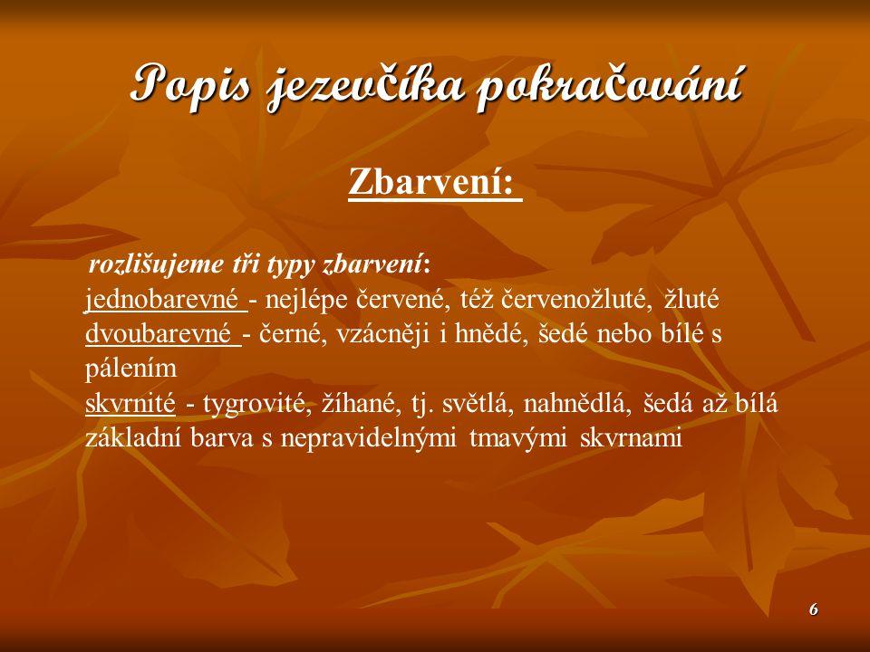 17 Onemocn ě ní U jezevčíků, nejvíce hrozí onemocnění páteře.