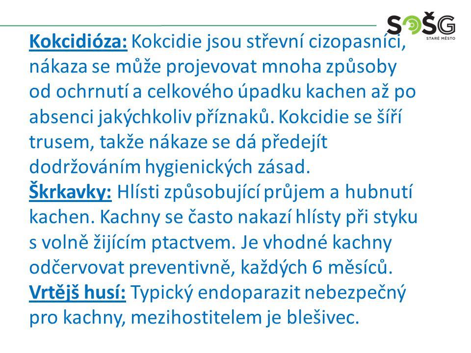 Kokcidióza: Kokcidie jsou střevní cizopasníci, nákaza se může projevovat mnoha způsoby od ochrnutí a celkového úpadku kachen až po absenci jakýchkoliv