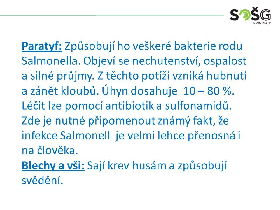 Paratyf: Způsobují ho veškeré bakterie rodu Salmonella. Objeví se nechutenství, ospalost a silné průjmy. Z těchto potíží vzniká hubnutí a zánět kloubů