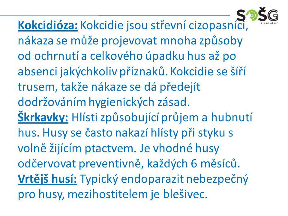 Kokcidióza: Kokcidie jsou střevní cizopasníci, nákaza se může projevovat mnoha způsoby od ochrnutí a celkového úpadku hus až po absenci jakýchkoliv př