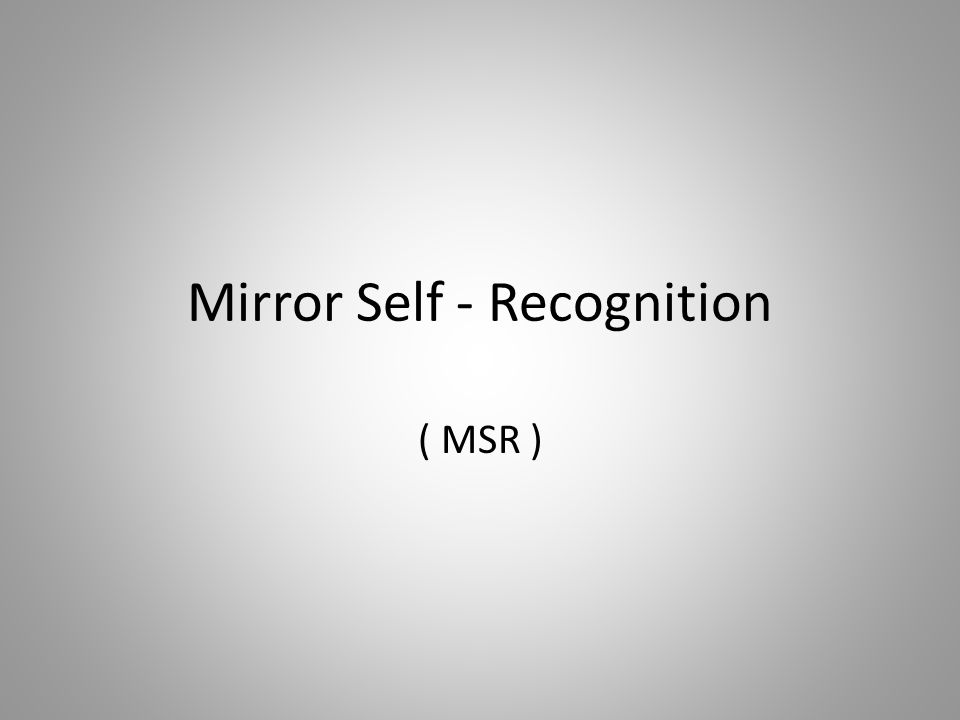 Mirror Self - Recognition ( MSR )