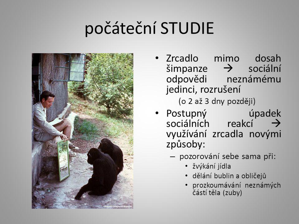 počáteční STUDIE Zrcadlo mimo dosah šimpanze  sociální odpovědi neznámému jedinci, rozrušení (o 2 až 3 dny později) Postupný úpadek sociálních reakcí  využívání zrcadla novými způsoby: – pozorování sebe sama při: žvýkání jídla dělání bublin a obličejů prozkoumávání neznámých částí těla (zuby)