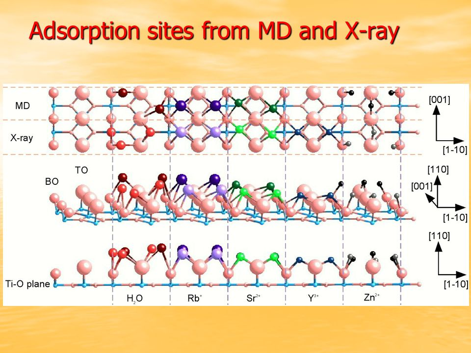 Adsorption sites from MD and X-ray