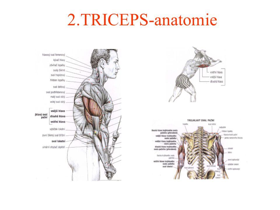 2.TRICEPS- rozpis jednotlivých cviků CvikPočet sérií Počet opakování Poznámka Viz.obrázek 1.Kliky na dvou lavicích 36-8Paže 21 2.Tricepsový zdvih s obouruční činkou za hlavou 36-8Paže 15 3.Tricepsové stahování horní kladky 36-8Paže 12