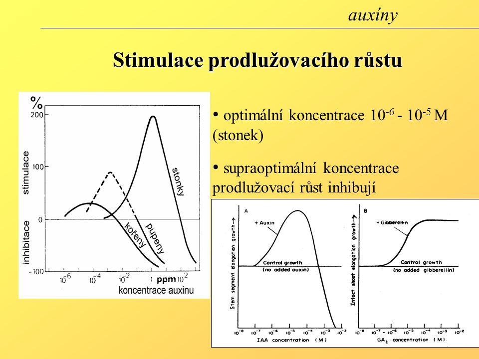 optimální koncentrace 10 -6 - 10 -5 M (stonek) supraoptimální koncentrace prodlužovací růst inhibují odpověď 10 min.