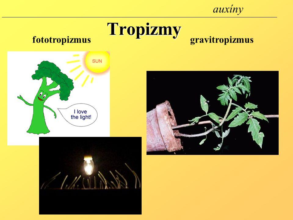 Tropizmy fototropizmusgravitropizmus auxíny