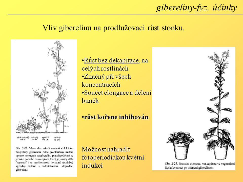 Růst bez dekapitace, na celých rostlináchRůst bez dekapitace, na celých rostlinách Značný při všech koncentracíchZnačný při všech koncentracích Součet elongace a dělení buněkSoučet elongace a dělení buněk růst kořene inhibovánrůst kořene inhibován Možnost nahradit fotoperiodickou květní indukci Vliv giberelinu na prodlužovací růst stonku.