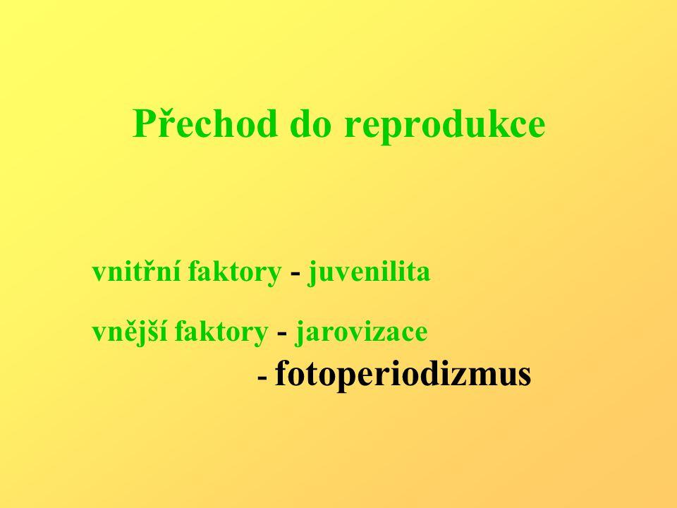 Přechod do reprodukce vnitřní faktory - juvenilita vnější faktory - jarovizace - fotoperiodizmus
