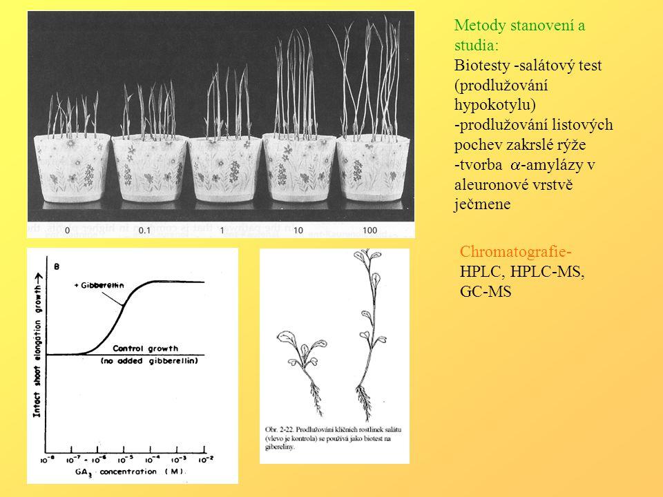 Metody stanovení a studia: Biotesty -salátový test (prodlužování hypokotylu) -prodlužování listových pochev zakrslé rýže -tvorba  -amylázy v aleuronové vrstvě ječmene Chromatografie- HPLC, HPLC-MS, GC-MS
