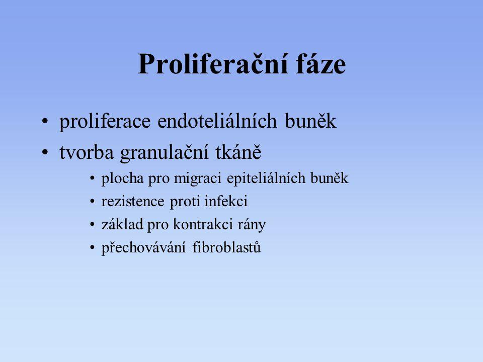 Proliferační fáze proliferace endoteliálních buněk tvorba granulační tkáně plocha pro migraci epiteliálních buněk rezistence proti infekci základ pro