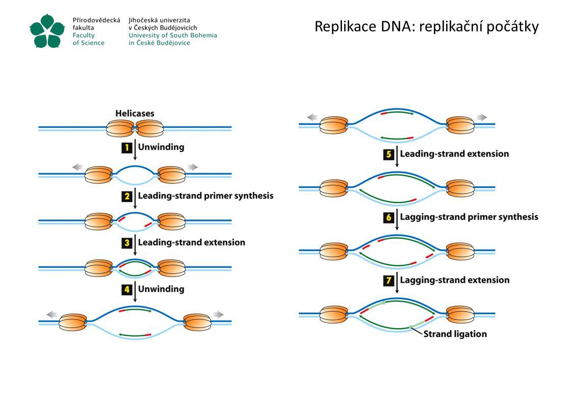 Replikace DNA: replikační počátky