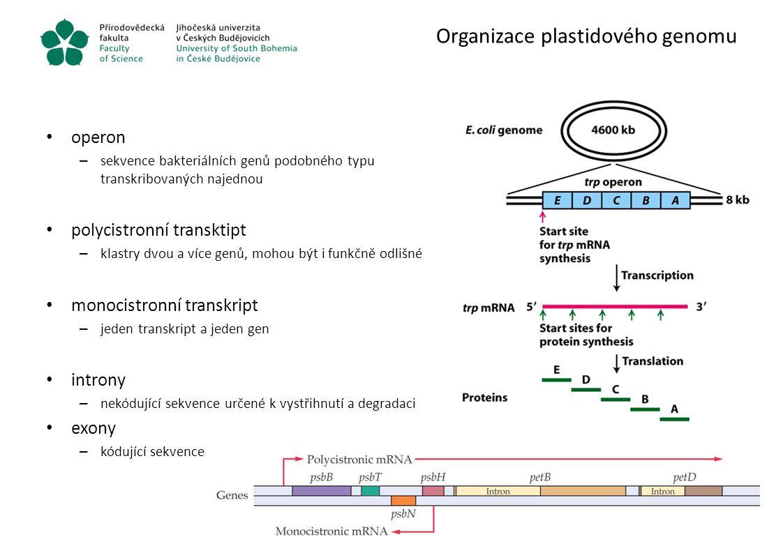 Organizace plastidového genomu operon – sekvence bakteriálních genů podobného typu transkribovaných najednou polycistronní transktipt – klastry dvou a