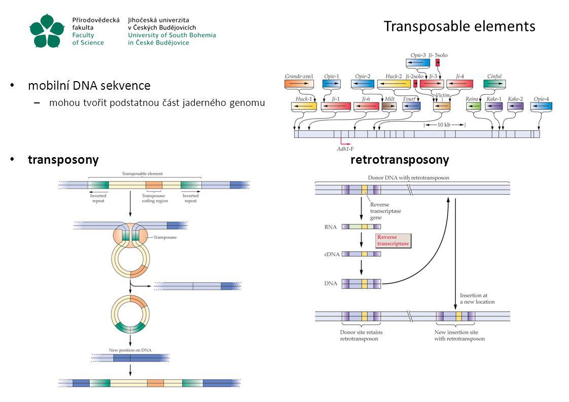Transposable elements mobilní DNA sekvence – mohou tvořit podstatnou část jaderného genomu transposonyretrotransposony