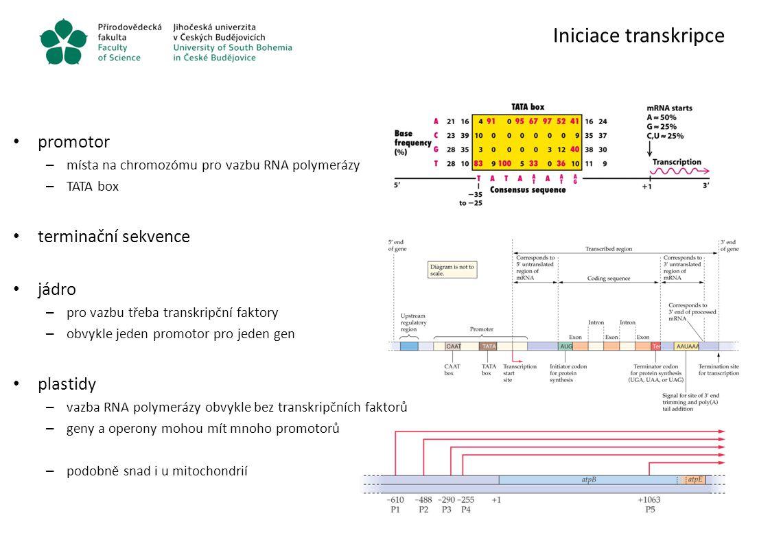 Iniciace transkripce promotor – místa na chromozómu pro vazbu RNA polymerázy – TATA box terminační sekvence jádro – pro vazbu třeba transkripční fakto