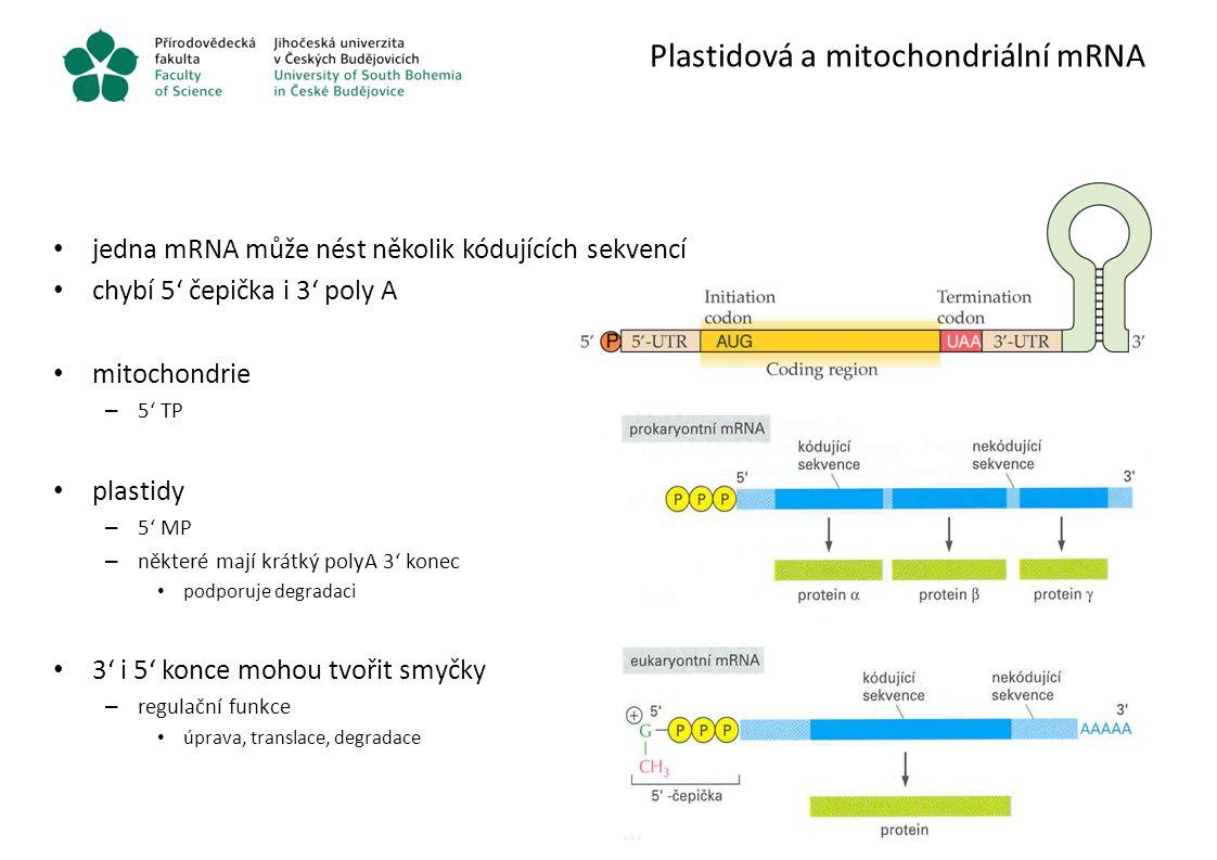 Plastidová a mitochondriální mRNA jedna mRNA může nést několik kódujících sekvencí chybí 5' čepička i 3' poly A mitochondrie – 5' TP plastidy – 5' MP