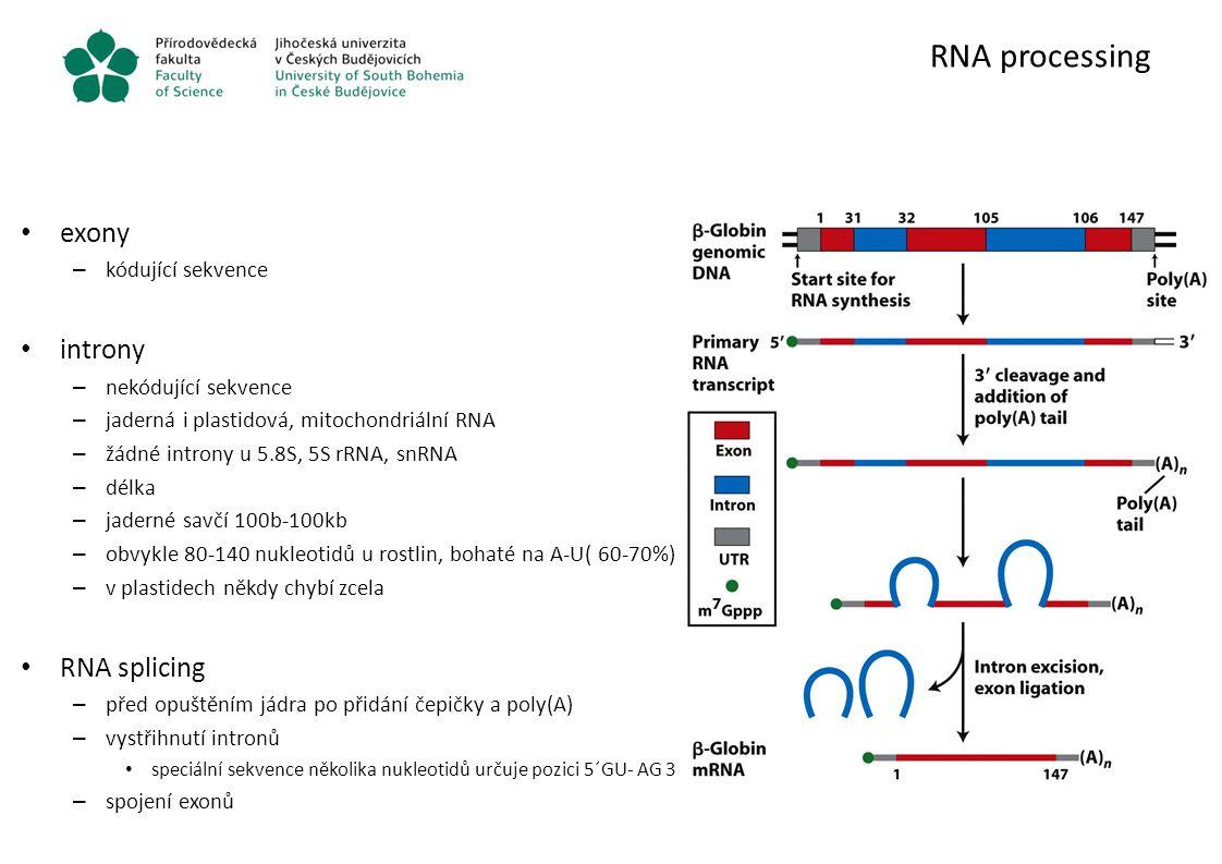 RNA processing exony – kódující sekvence introny – nekódující sekvence – jaderná i plastidová, mitochondriální RNA – žádné introny u 5.8S, 5S rRNA, sn