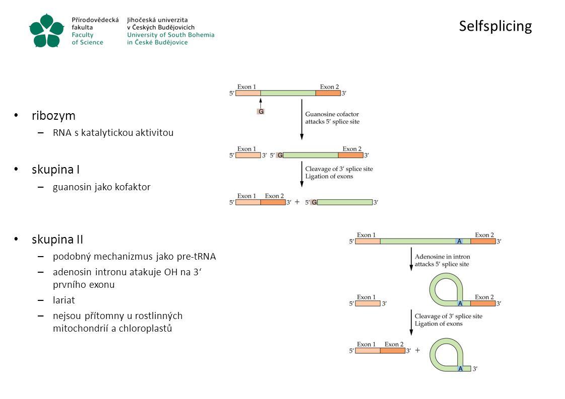 Selfsplicing ribozym – RNA s katalytickou aktivitou skupina I – guanosin jako kofaktor skupina II – podobný mechanizmus jako pre-tRNA – adenosin intro