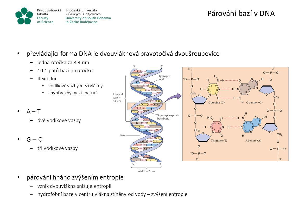 Alternativní struktury DNA B forma – nejčastější A DNA – dehydratovaná forma – RNA-RNA, RNA-DNA šroubovice – in vitro, ale i v buňkách Z DNA – levotočivá šroubovice – střídavé sekvence purinu a pyrimidinu, nejčastěji G, C