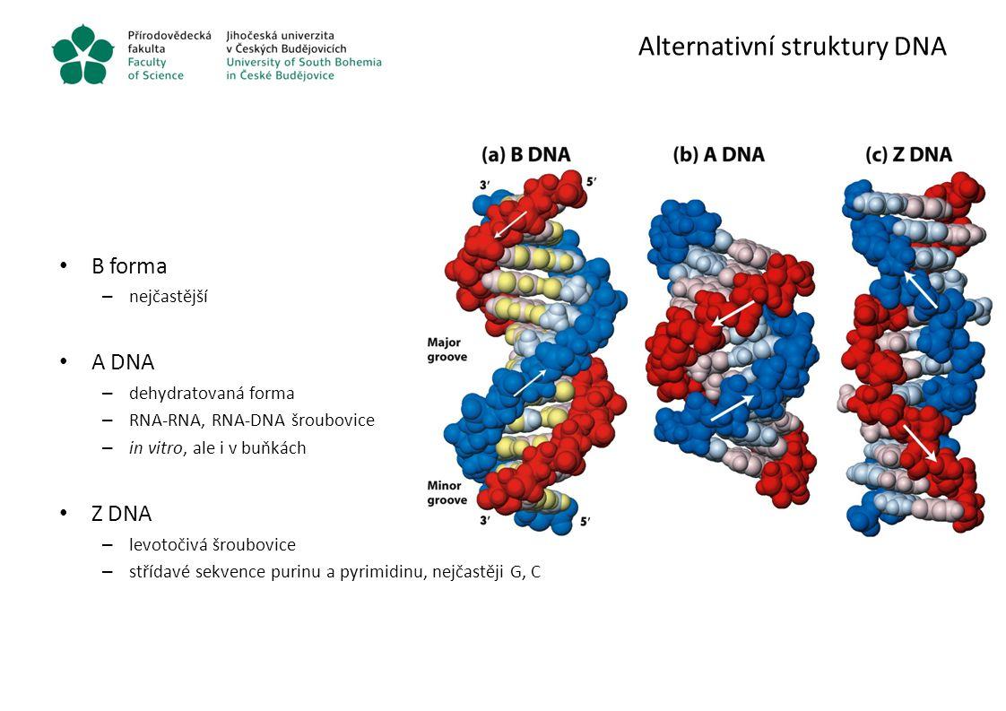 Alternativní struktury DNA B forma – nejčastější A DNA – dehydratovaná forma – RNA-RNA, RNA-DNA šroubovice – in vitro, ale i v buňkách Z DNA – levotoč