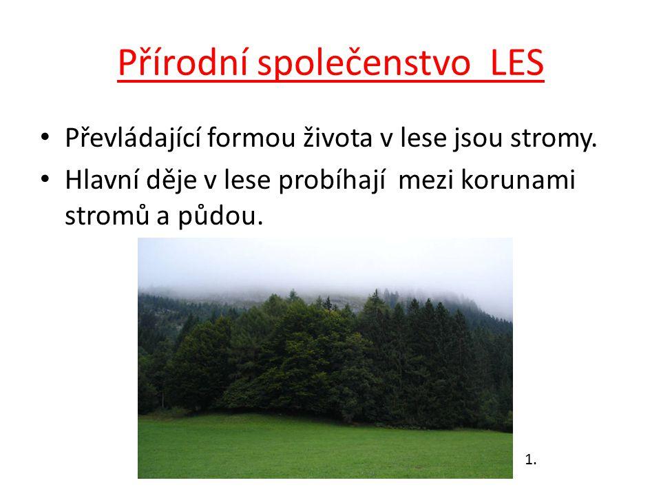 Přírodní společenstvo LES Převládající formou života v lese jsou stromy. Hlavní děje v lese probíhají mezi korunami stromů a půdou. 1.