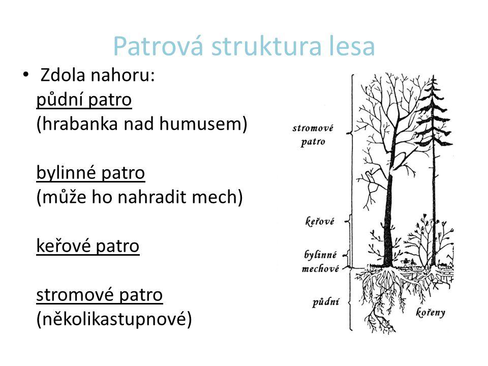 Patrová struktura lesa Zdola nahoru: půdní patro (hrabanka nad humusem) bylinné patro (může ho nahradit mech) keřové patro stromové patro (několikastu