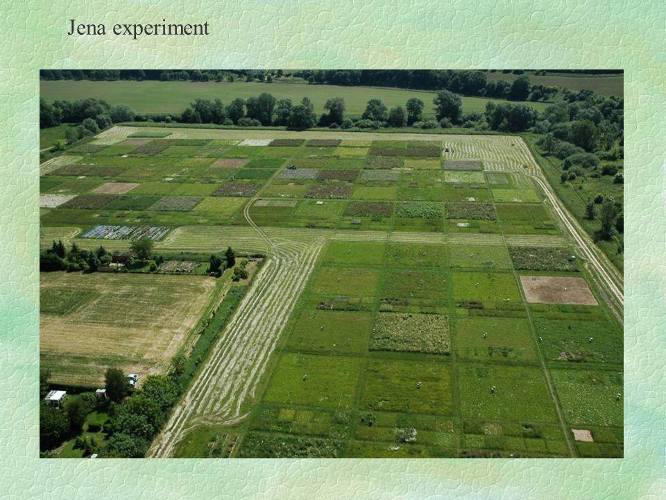 Jena experiment