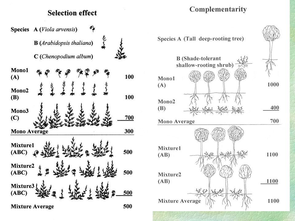 Kterýkoliv z selection a complementarity efektů §Je schopen generovat (statisticky vysoce průkaznou) pozitivní závislost biomasy na druhové bohatosti §Ale Selection není schopen generoval transgressive overyielding (tj.