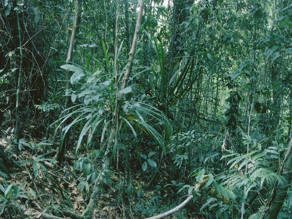 Předpoklad: Ekosystémy stále ztrácejí druhy §Může ztráta druhů ohrozit fungování ekosystémů.