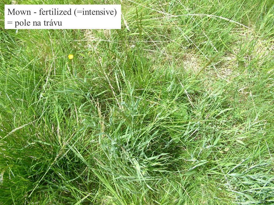 Mown - fertilized (=intensive) = pole na trávu