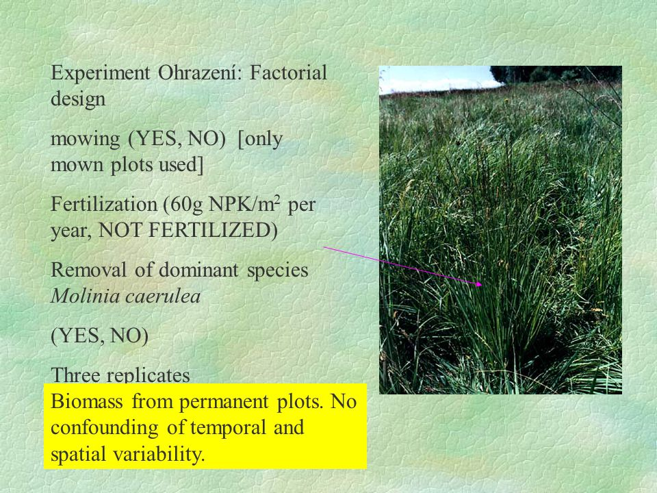 Experiment Ohrazení: Factorial design mowing (YES, NO) [only mown plots used] Fertilization (60g NPK/m 2 per year, NOT FERTILIZED) Removal of dominant