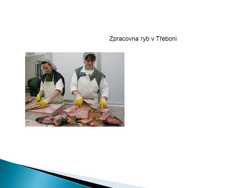 Zpracovna ryb v Třeboni