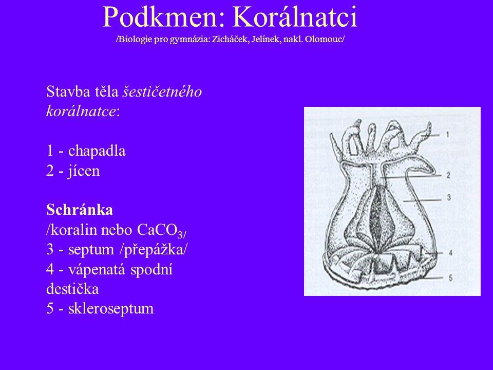Podkmen: Korálnatci /Biologie pro gymnázia: Zicháček, Jelínek, nakl. Olomouc/ Stavba těla šestičetného korálnatce: 1 - chapadla 2 - jícen Schránka /ko