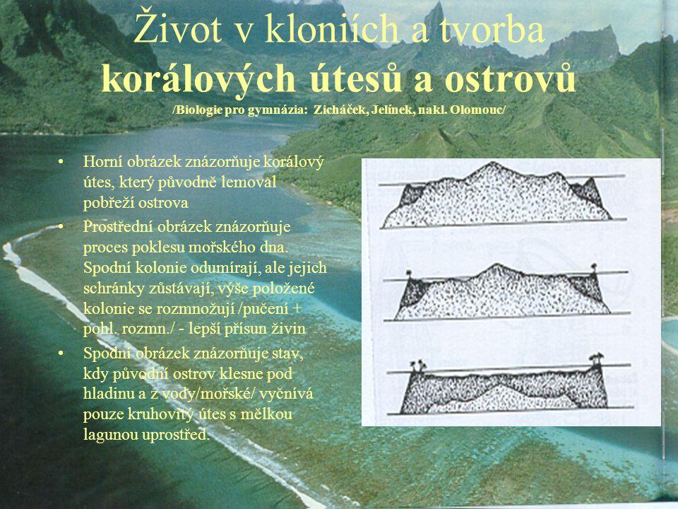 Život v kloniích a tvorba korálových útesů a ostrovů /Biologie pro gymnázia: Zicháček, Jelínek, nakl. Olomouc/ Horní obrázek znázorňuje korálový útes,