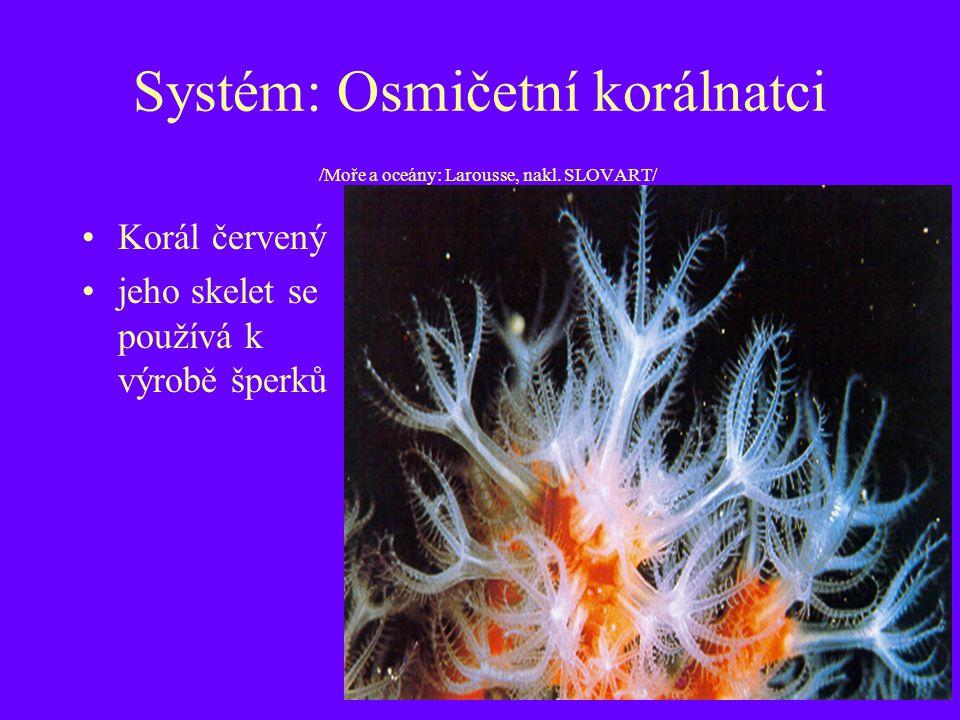 Systém: Osmičetní korálnatci /Moře a oceány: Larousse, nakl. SLOVART/ Korál červený jeho skelet se používá k výrobě šperků
