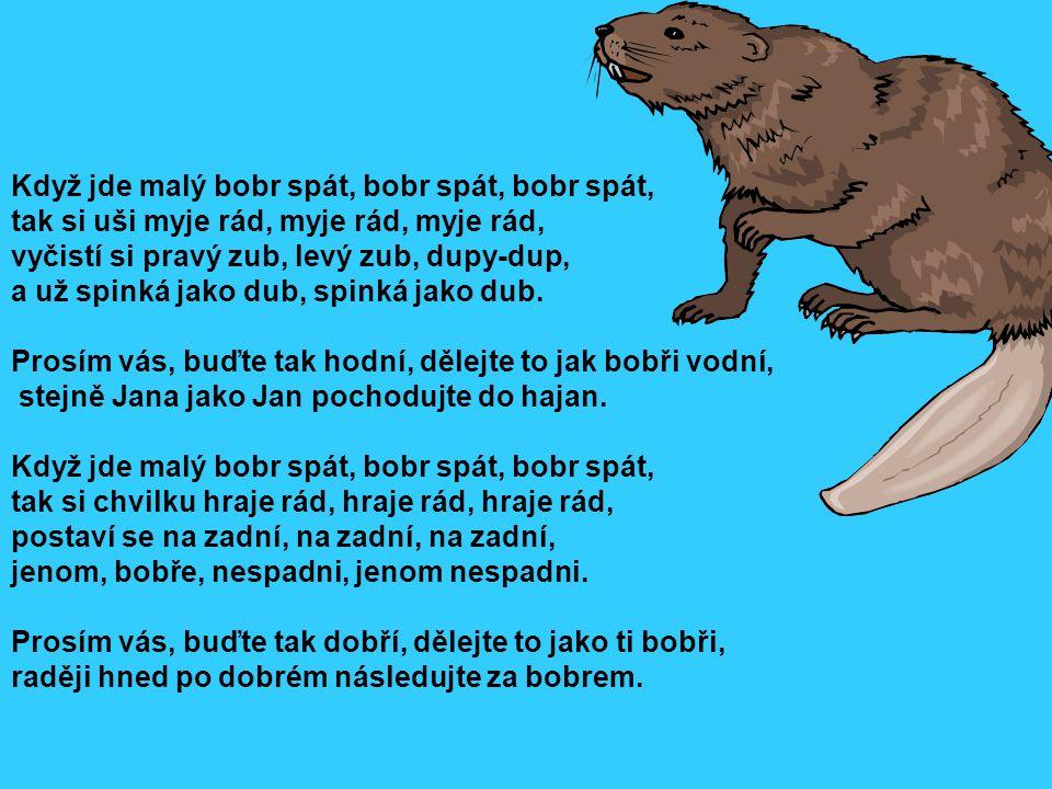 Když jde malý bobr spát, bobr spát, bobr spát, tak si uši myje rád, myje rád, myje rád, vyčistí si pravý zub, levý zub, dupy-dup, a už spinká jako dub