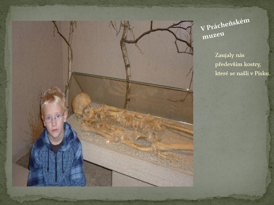 V Prácheňském muzeu Zaujaly nás především kostry, které se našli v Písku.