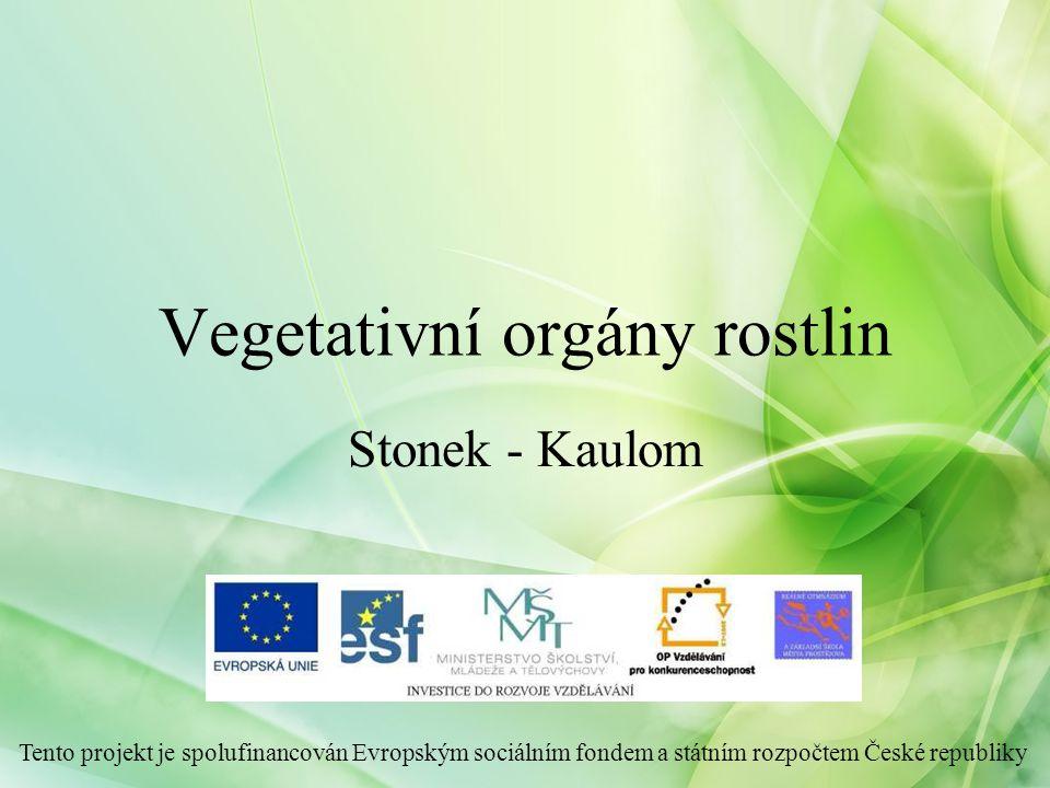 Funkce stonku Stonek = nadzemní část cévnatých rostlin Funkce: 1.Mechanická -nese listy a reprodukční orgány -zajišťuje optimální polohu listů pro fotosyntézu -zajišťuje optimální polohu květů 2.Transportní - vede transpirační a asimilační proud 3.Asimilační 4.Zásobní 5.Vegetativní rozmnožování Vegetativní orgány rostlin