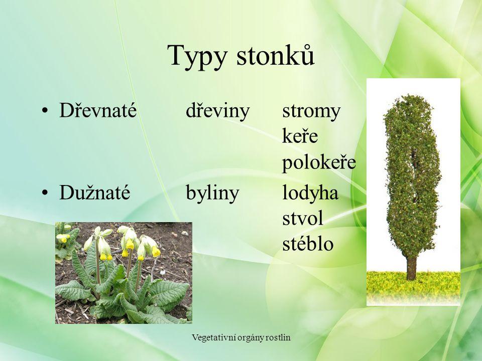Typy stonků Dřevnatédřevinystromy keře polokeře Dužnatébylinylodyha stvol stéblo Vegetativní orgány rostlin