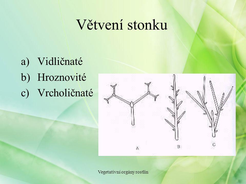 Větvení stonku a)Vidličnaté b)Hroznovité c)Vrcholičnaté Vegetativní orgány rostlin