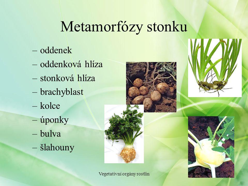 Metamorfózy stonku –oddenek –oddenková hlíza –stonková hlíza –brachyblast –kolce –úponky –bulva –šlahouny Vegetativní orgány rostlin