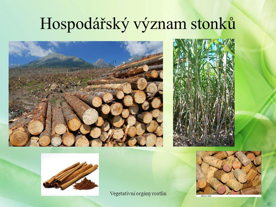 Hospodářský význam stonků Vegetativní orgány rostlin