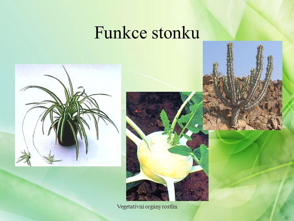 Funkce stonku Vegetativní orgány rostlin