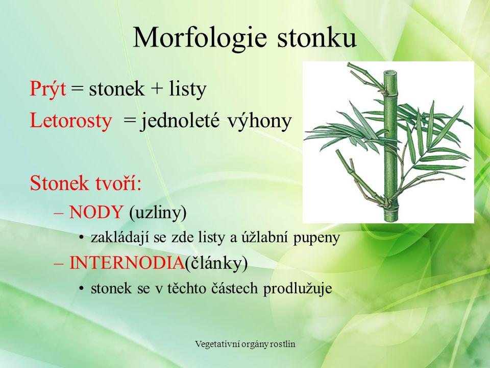 Morfologie stonku Prýt = stonek + listy Letorosty = jednoleté výhony Stonek tvoří: –NODY (uzliny) zakládají se zde listy a úžlabní pupeny –INTERNODIA(