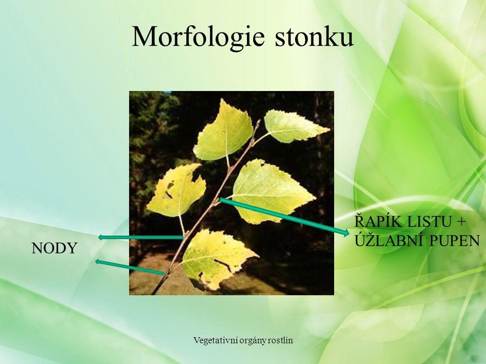 NODY ŘAPÍK LISTU + ÚŽLABNÍ PUPEN Morfologie stonku Vegetativní orgány rostlin