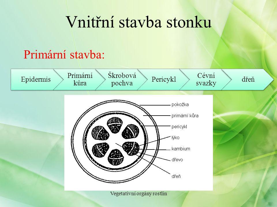Hospodářský význam stonků Potrava pro člověka Krmivo pro hospodářská zvířata Suroviny pro průmysl Vegetativní orgány rostlin