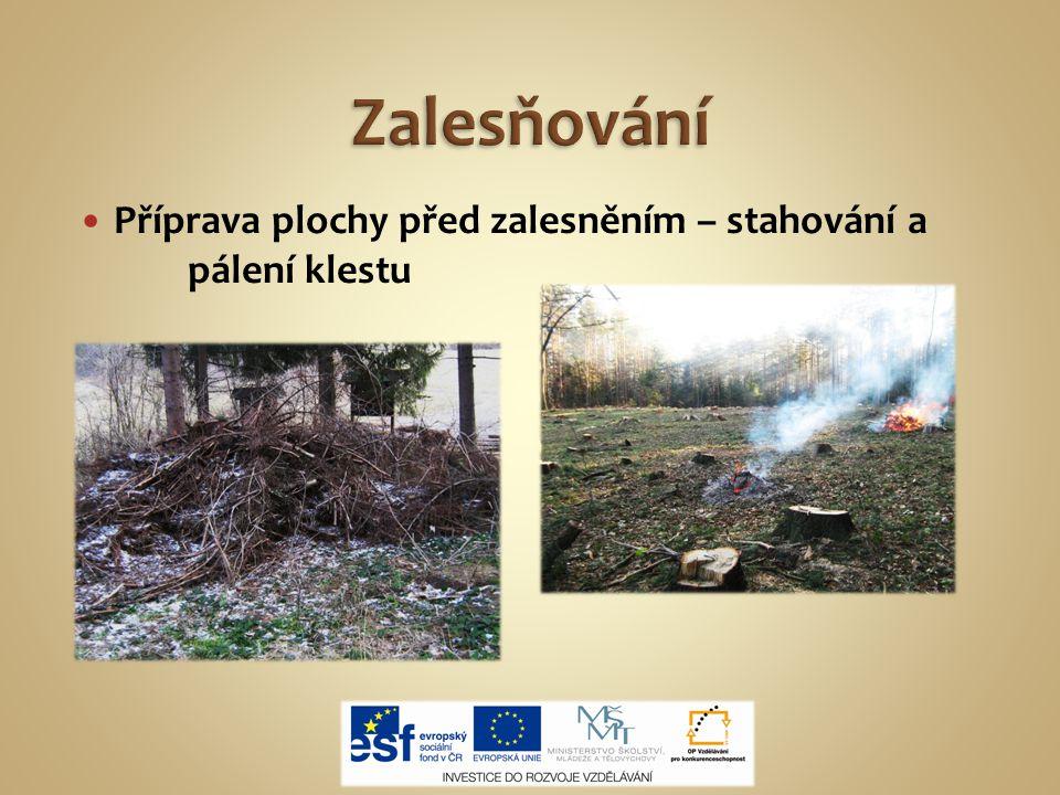 Příprava plochy před zalesněním – stahování a pálení klestu