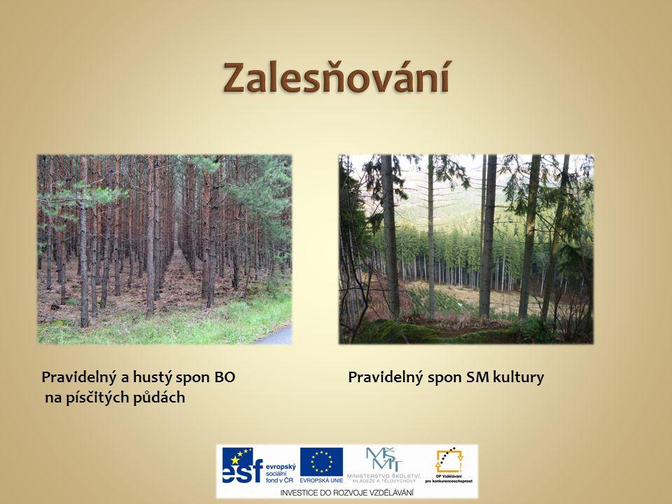 Sazenice pro zalesnění ukládáme do tzv.