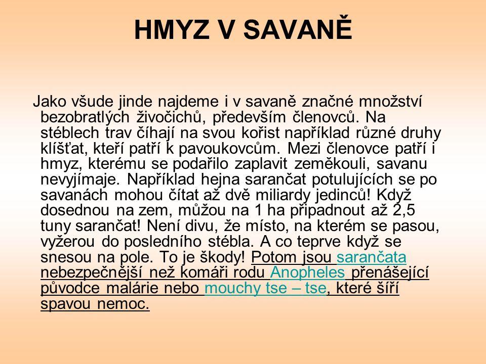 HMYZ V SAVANĚ 1.Přečti text a vyřeš následující úkoly.